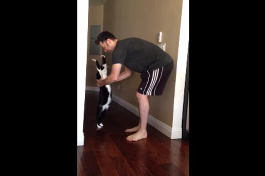 【猫厨注意】こいつら可愛すぎるだろ!猫っぽくないニャンコたち【動画4つ】