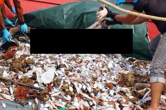 【グロ画像】引き上げられた水死体の下腹部に群がっていた魚