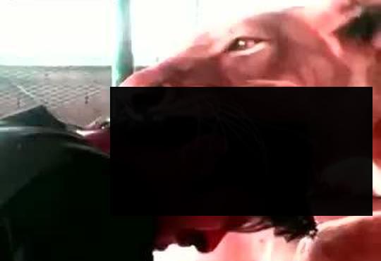 【恐怖】エサにされた人間!これが本来の弱肉強食だ【動画1本・画像10枚】
