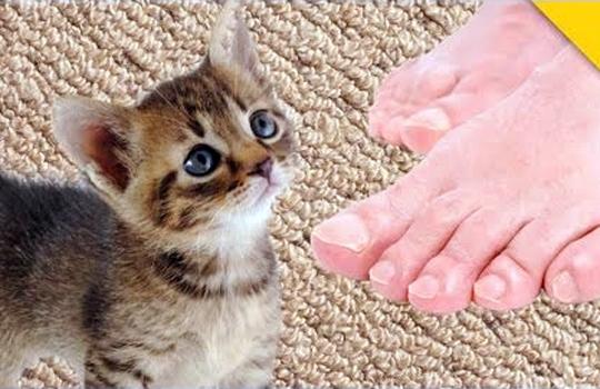 【おもしろ:猫】「ご主人マジ臭せぇ!!死ぬ!」足臭に悶絶する猫
