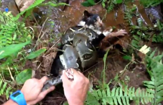 【猫動画】蛇に襲われて助けを求める猫!撮影者がなんとか救出!