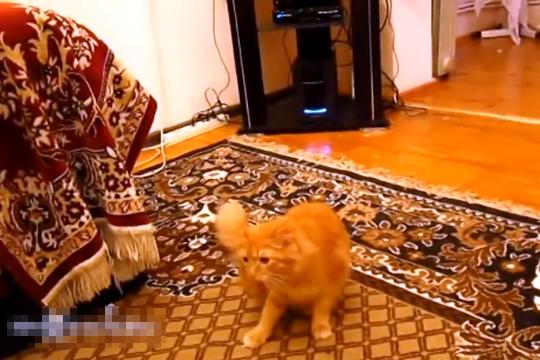 【猫動画】マリオのジャンプ音に驚く猫w音と合いすぎwww