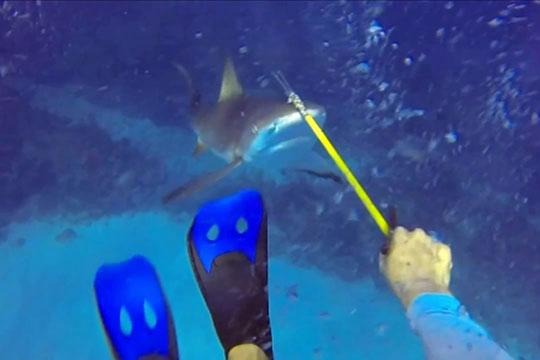 【ハプニング】サメVS漁師 銛一本でサメとガチ死闘