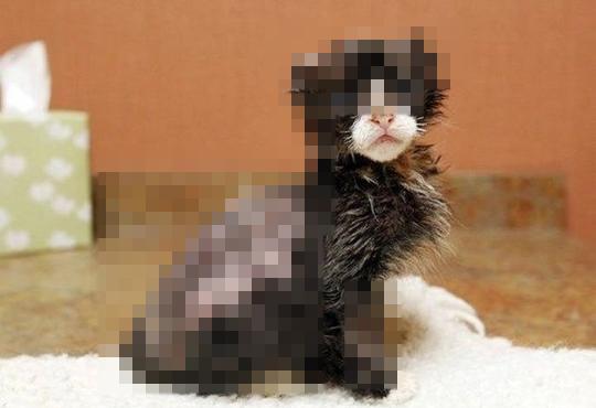 【グロ閲覧注意】可愛い子猫を可燃性液体をかけて火だるまに・・・