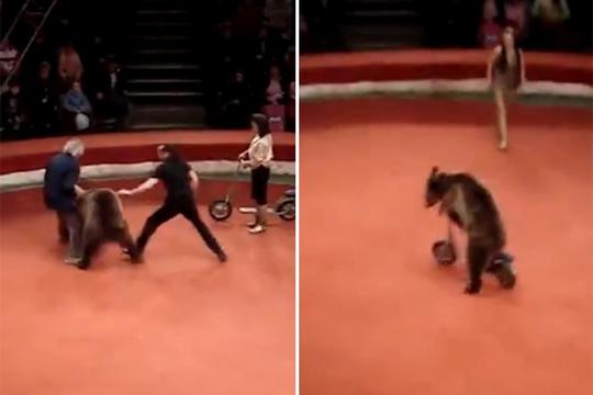 【衝撃:熊】サーカスの熊が女性に襲い掛かる!キックボードがやりたかったらしいw
