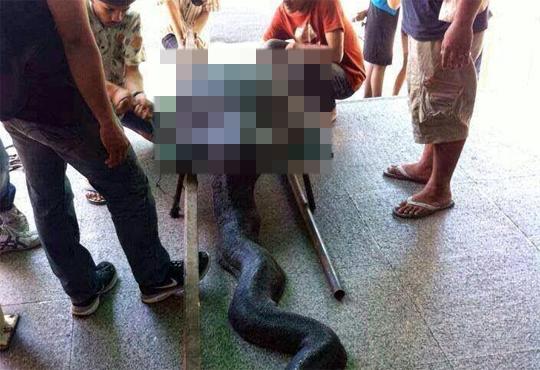 【グロ注意】巨大な亀を飲み込んで死んだヘビの画像がヤバい