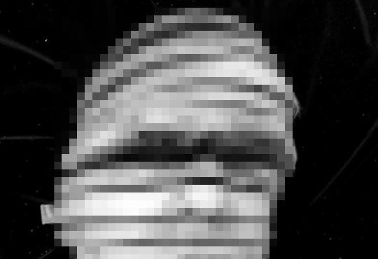 【閲覧注意】人間の頭をまるで包丁で輪切りにしたかのように