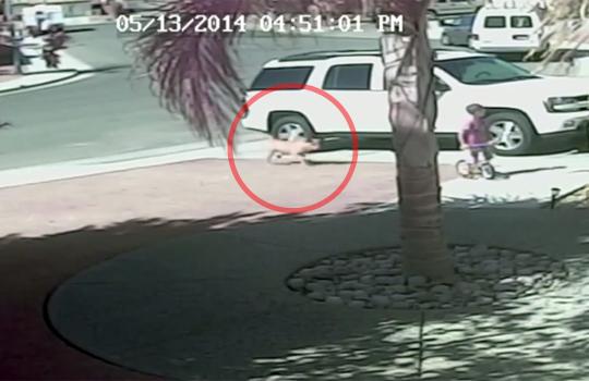 【衝撃映像】猛犬が小さな子供を襲った瞬間、ペットの猫が現れ子供を救う!!