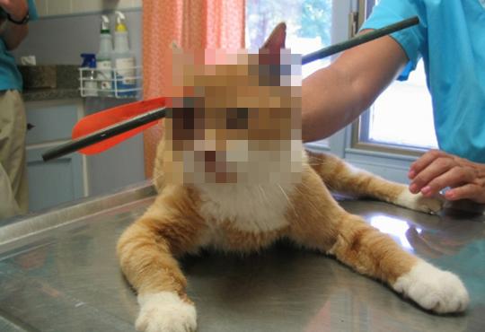 【グロ画像】猫好きは発狂するから見るなよ!絶対見るなよ!