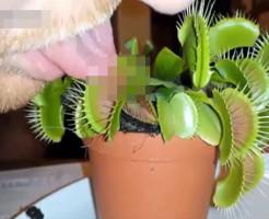 【衝撃映像】食虫植物に舌を食べさせてみたwww