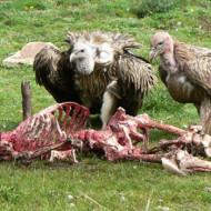 【グロ画像】こんな死に方は嫌だ!悲惨なグロ死体集めてみた。。。【画像13枚】