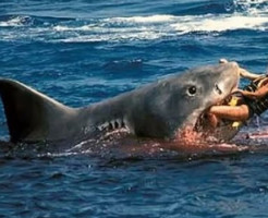【グロ注意】サメに襲われた少女が救出され死亡するまでの一部始終