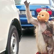 【狂気】お猿さんに人形の頭被せたら完全にホラーになった・・・