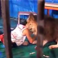 【グロ動画】DQN『ライオンの檻に入ったろw』→案の定食い殺されて終了