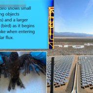 【衝撃映像】近寄った鳥さんたちが燃え落ちる恐怖の環境にさやしい太陽パネルの販促実演なうw inアメリカ