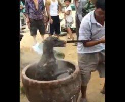 【閲覧注意】ちょっと野蛮すぎやしませんかねえ…生きたままの犬をブチこむ中国名物の土人鍋