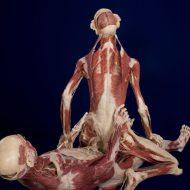【閲覧注意】模型だと思う?残念!本物でした~wガチの人間使ってる「人体の不思議展」行った画像うpする