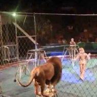 【トラウマ】サーカスの最中にライオンさん達が本気で裏切った際の絶望感がマジ半端ないwこんなん子供見たら絶対トラウマやろwww ※衝撃映像