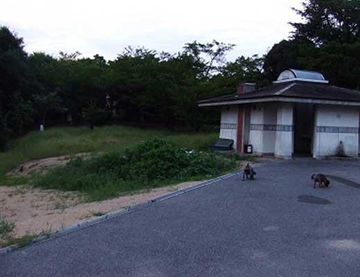 種松山山頂公園風景写真