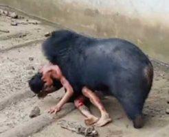 【人食い熊】日本→空手老人クマを撃退 海外動物園→クマにエサやろうとする→体パクっ!むしゃむしゃむしゃ ※グロ動画