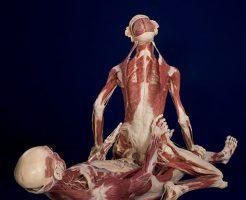 本物の人間の死体を展示した人体の不思議展写真うpする