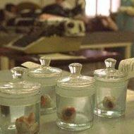 【衝撃】学校に置いてある人体標本の加工工場内部の写真がこれらしい・・・