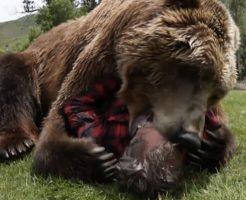 【閲覧注意】クマに顔をガツガツ食べられるって想像したことある?