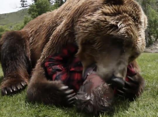 【閲覧注意】クマに顔をガツガツ食べられることって想像したことある?