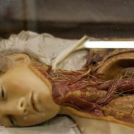 【閲覧注意】ロシアン美女の死体を流れるように解剖して脳みそと内臓を取り出してみたったw