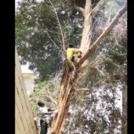 チェンソーで巨木をギコギコ→木「ただでは終わらんよ!」→予想外すぎるオチがwww