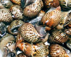ヒエッ…死んだ魚に群がる巻き貝さんが怖すぎるwwwwwww