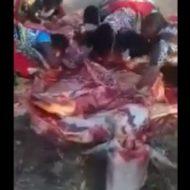こマ?牛の死体に群がり、女たちが生肉を貪り食う謎多き動画が見つかる…奇祭か黒魔術の儀式か?