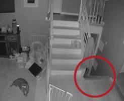 子供の幽霊を撮影することに成功!猫はリラックスしすぎやろw