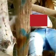 暴れ牛にお腹を突き刺されて臓物がこんにちわしてしまった男性w