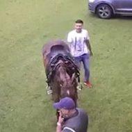 後ろを通っただけなのに…馬の鋭い後ろ蹴りが青年を襲う…!