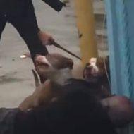 飼い主を襲っているピットブルたちが警察官たちに殺処分される…