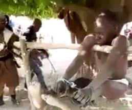 両手足を縛られ棒に吊るされる男がケツを引っ叩かれて本気で反省してるw