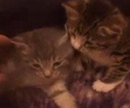 二匹の可愛い子猫を圧縮袋に入れて窒息死させるキチガイな男