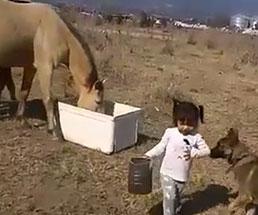 頑張って馬の餌を運ぶ女の子を微笑ましく撮影する両親だったが…