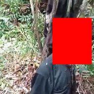 ジャングルの中で自殺するとこういう姿になるのか…