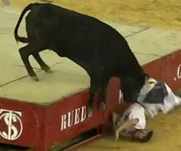 闘牛に追い掛け回され酷い目に遭っているオムニバス映像