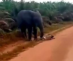 まず日本じゃありえないw象に襲われる日常w