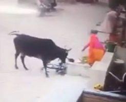 牛に襲われた自転車の男の子を助けようとした女性も…