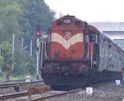 線路でふらつく動物たちが近づいてくる電車に容赦無く轢き殺される…