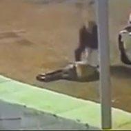 イカれたサイコパスがボコボコにした相手をハンマーで殴り殺す一部始終