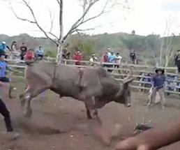 いとも簡単に暴れ牛に吹っ飛ばされる男たち