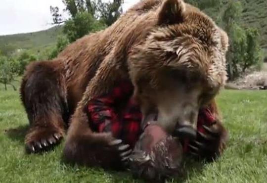 【グロ動画】熊が生きてる人間の顔を噛み千切ってるんだが・・・ ※閲覧注意